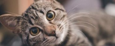 1606051593 the app that promises to translate cat meows created by