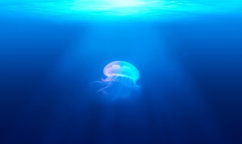 1627035197 With this app you can know if there are jellyfish